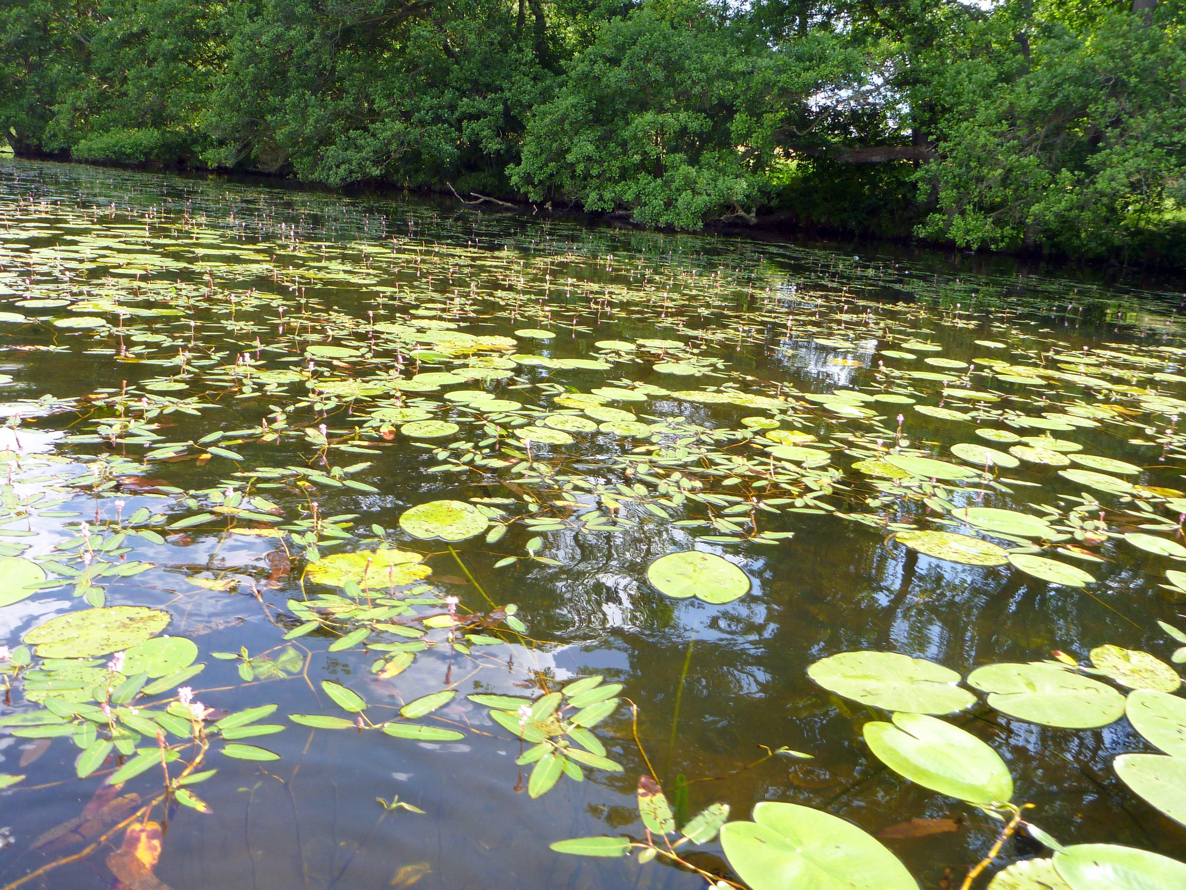Åkander i en sø