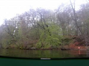 En tidlig forårsdag i Furesøen, hvor bøgen er lige ved at springe ud....
