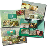 postkort med motiver fra danske farvande