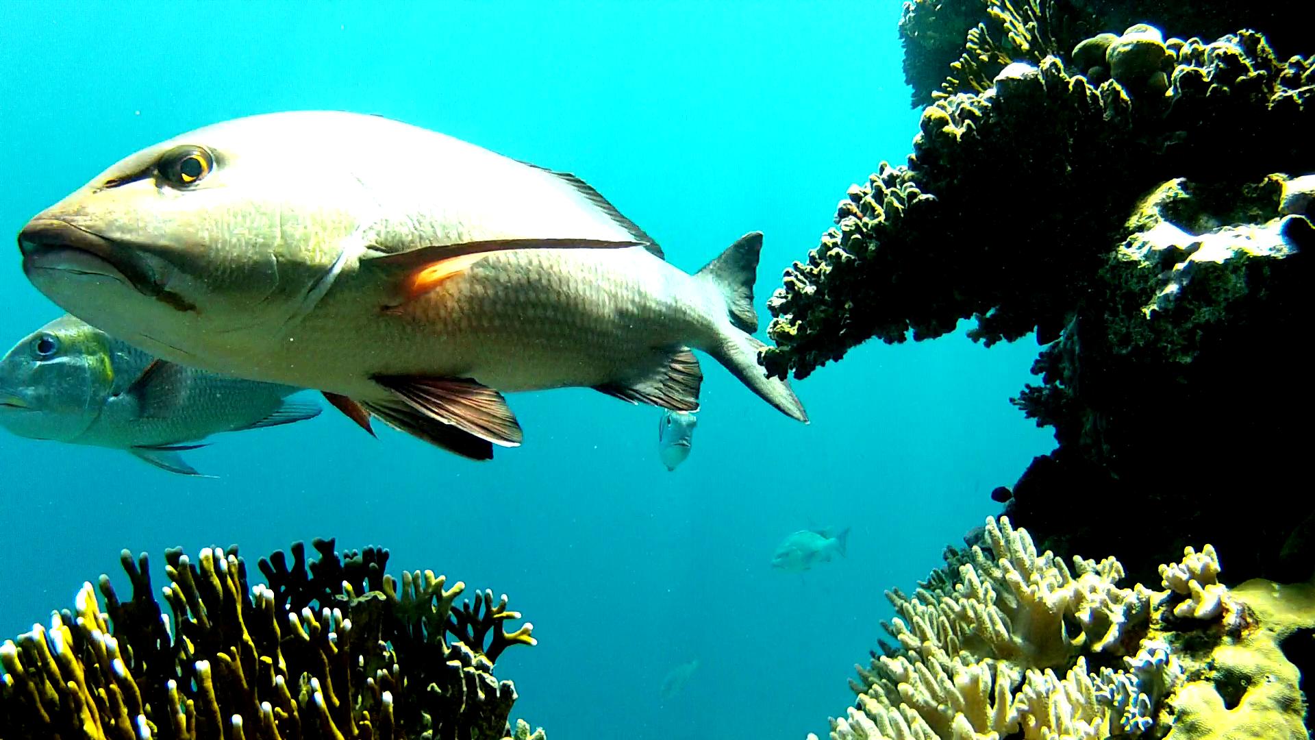 Et kamera har stået på koralrevet i Rødehavet i et par timer og optaget fiskenes aktivitet