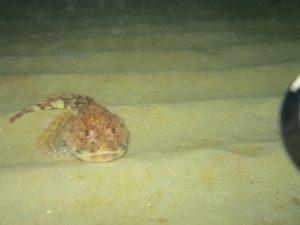 en ulk i natten på en nat-snorkletur