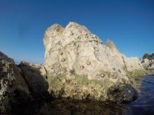 Kroatien -skallus på klipperne