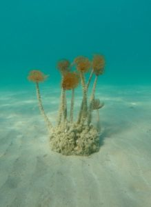 Graciøse orme vifter i bølgerne i sandet ved Split, Kroatien