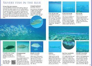 Opslag fra e-bogen: Red Sea Snorkeling