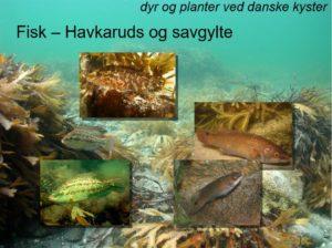 Foredrag om livet i havet