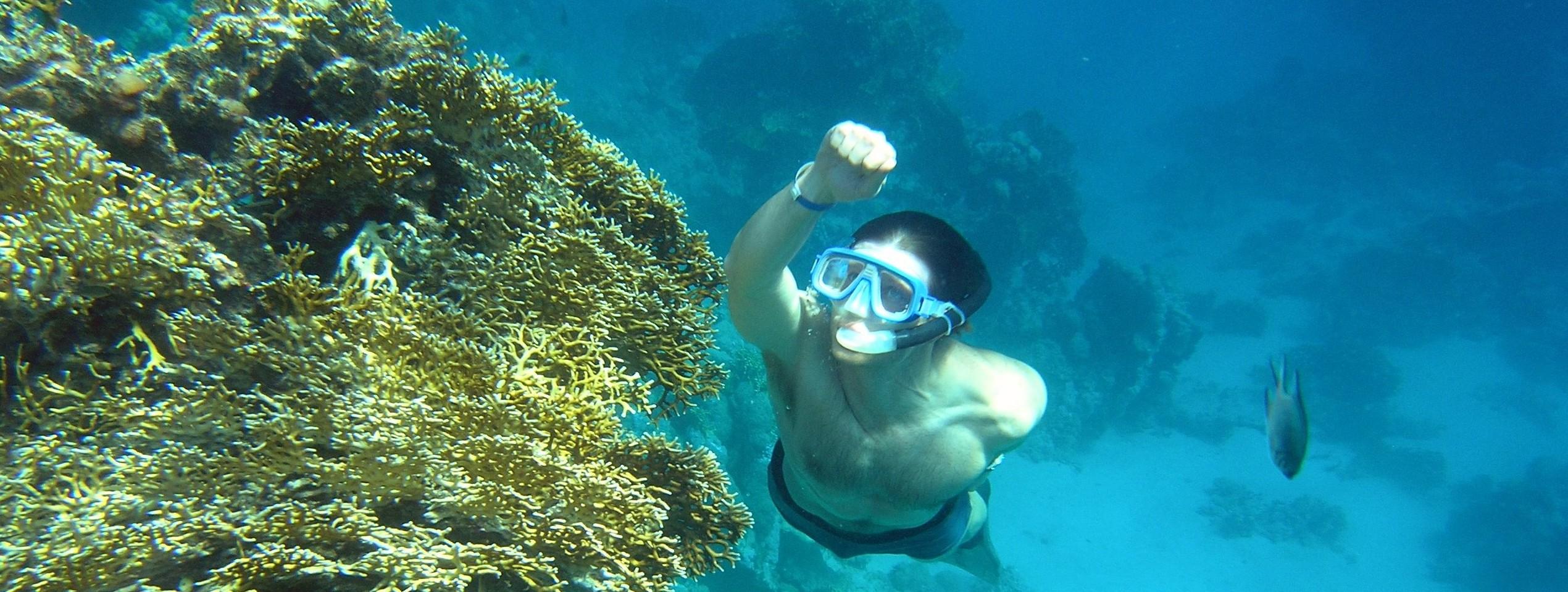 snorkling i Rødehavet