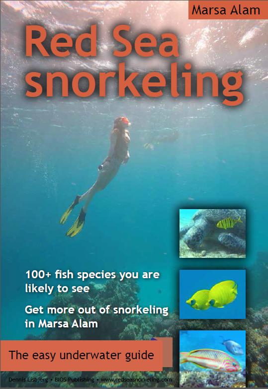 forside til e-bog om snorkling og fisk i Rødehavet