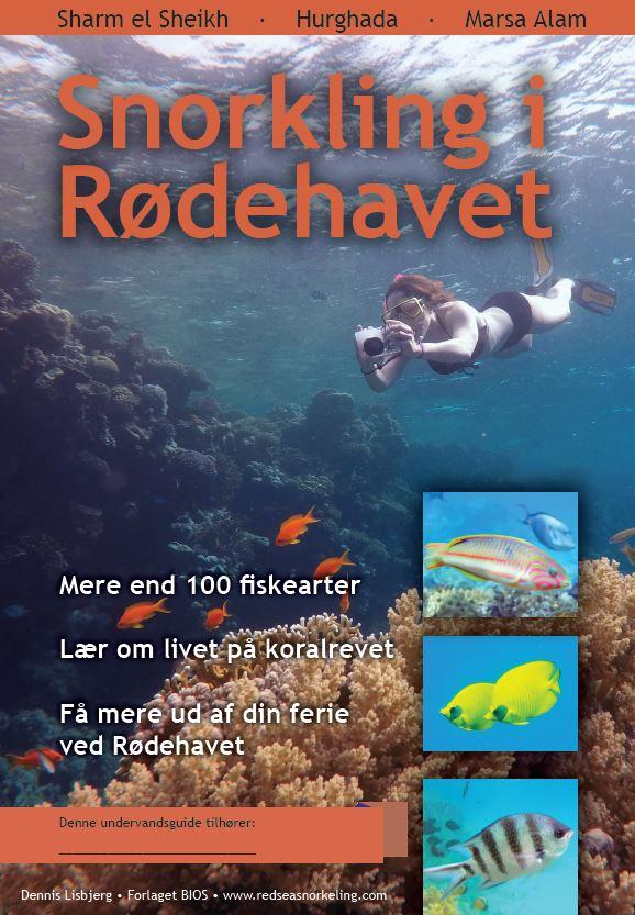 Snorkling i Rødehavet - fisk ved koralrevet i Sharm el Sheikh, Hurghada og Marsa Alam