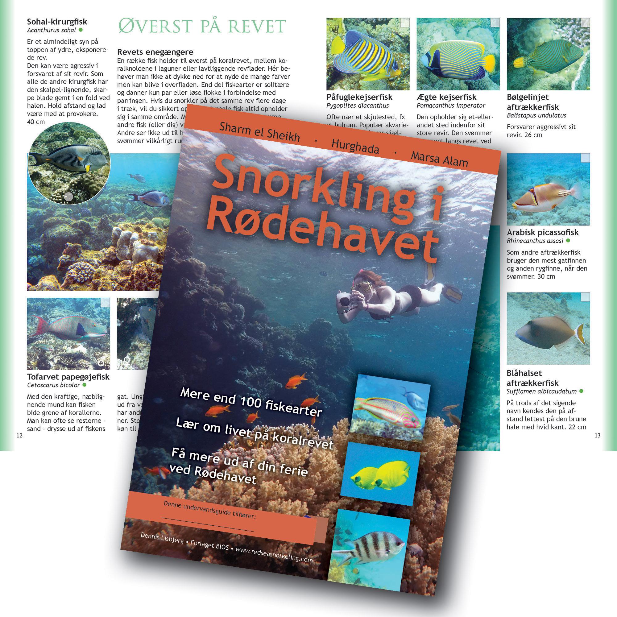 snorkling i Rødehavet - om koralrevets fisk i Sharm, Hurghada, Marsa Alam